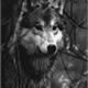 ~helennawolf