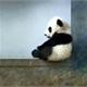 ~panda-cham