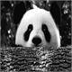 ~Panda_Of_Galaxi