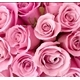 ~Pink_8