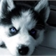 ~Puppy-kun
