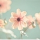 ~Springflowers