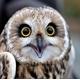 ~TheOwl