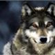 ~theowolf