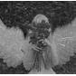 Usuário: Angelizzie
