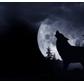 Usuário: crystal_wolf