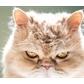 Usuário: ~Gato_Vingativo