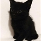 Usuário: ~Cat-Girl23