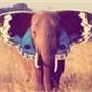 Usuário: ~Elefantes_Uivam