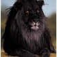 Usuário: ~Black__Lion