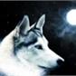 Usuário: ~Kiara-Wolf