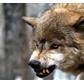 Usuário: ~Goldenwolf