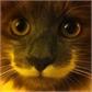Usuário: ~GatoVigilante