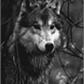 Usuário: ~helennawolf