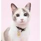 Usuário: ~Jupiter-Cat