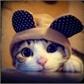 Usuário: ~Kitty__Batata
