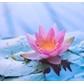 Usuário: lothusflower