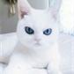 Usuário: ~Cat_Maravilha