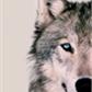 Usuário: ~Wolfa_015