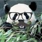 Usuário: ~Panda-Purpurina