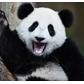 Usuário: PandaHistorias