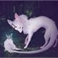 Usuário: ~Pequena-ratinha