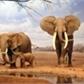 Usuário: ~ElephantMemory
