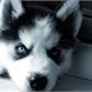 Puppy-kun