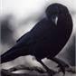 Usuário: ~Raven_Clau
