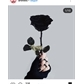 Usuário: Rosas_negras