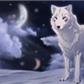Usuário: ~wolf-white