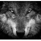 Silverwolf873