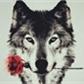 Usuário: ~Wolf555