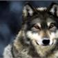 Usuário: Wolf_san