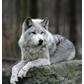 Usuário: ~Wolfgirl05