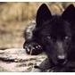 Usuário: ~The-Kind-Wolf