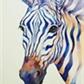 zebra_azul